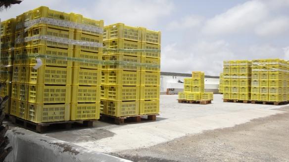 Cajas de uvas en las bodegas El Grifo de la isla de Lanzarote